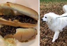 Someone Tried Poisoning Neighborhood Dog With Hot Dog Bun