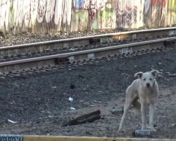 Blue-Eyed Husky Had No One, Stood Alone On The Tracks Of A Ghost Town