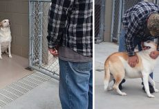 Shelter Dog 'Without A Personality' Finally Smiles When Owner Shows Up