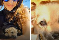 Woman Vacationing Abroad Stumbles Upon Sick Stray Puppy On Side Of The Road