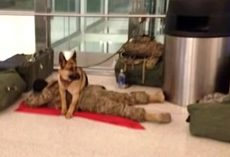 Exhausted Soldier Receives Unsolicited Protection For A Nap At The Airport