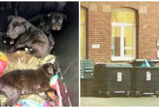 7 Terrified, Sickly Pups Stuffed Into Plastic Bin & Tossed On Side Of Road