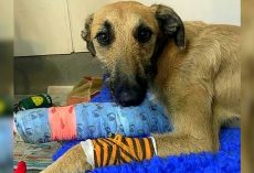 Dog's Front Leg Was Split In Two, So His Owner Tied Him To A Lamppost And Left