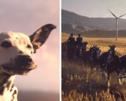 Budweiser Super Bowl Ad Features The Clydesdales And One Happy Pooch