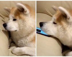 Depressed Doggo Has Strangest Reaction To Hearing Sister's Voice On Phone