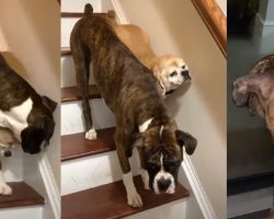 Dog Guides Blind Pup Down The Stairs & Keeps A Close Eye As He Lets Him Out
