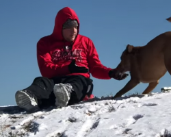 Dog Wants To Sled But Is Hesitant To Get On, Proceeds To Jump On Dad's Back Instead