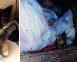 Owner Seals Kitten In A Tight Plastic Bag And Tosses Her Into The Garbage Truck