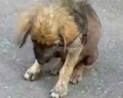 Puppy Forced Out Of His Home For Being Sick Hangs His Head In Shame