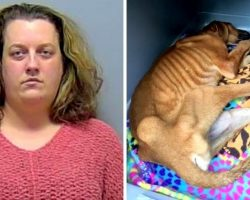 Woman Adopts Sweet Dog Only To Lock Him Up And Let Him Die Without Food Or Water