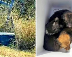 Man Spots A Discarded Cooler In Middle Of Nowhere, Opens It And Finds 3 Puppies