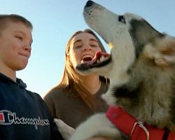 Lost Husky Howls With Happiness When He Sees His Humans After 7 Months Apart