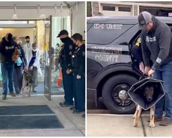 Officers Cheer On K9 As He Takes First Steps Since Surviving 2 Gunshot Wounds
