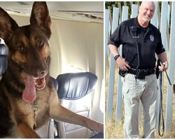 Officer Mourns The Loss Of His Beloved K9 Partner After 10 Years Together