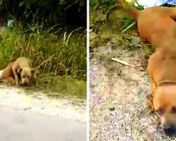 Dog Fighting Ring Dumped Pit Bull In The Trash, But No One Stopped To Help Her