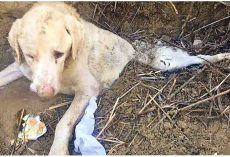 Savage Owner Buried His Old Dog Alive For Being Useless & He Couldn't Escape