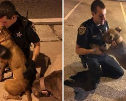 Cops Sit On The Street With 2 Scared Pit Bulls And Wait For Help To Arrive