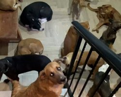 Man Opens His Home To 300 Homeless Dogs Who Were Stuck Outside During Hurricane