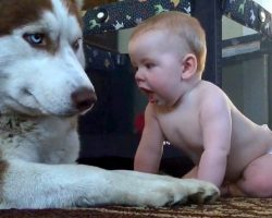 "Dog's Patience Runs Out When Baby Gets Too Close & Dog ""Has A Go"" At Baby's Face"