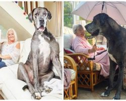 World's Tallest Male Dog Crosses Over To Rainbow Bridge & Fans Are Mourning