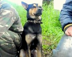 Exhausted Military Dog Sways Back And Forth As He Tries His Best To Stay Awake