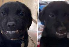 Smiling Puppy Shows Teeth To Everyone At Louisiana Dog Shelter Hoping To Find Forever Home
