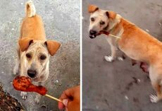 Street Dog Took His Chicken Piece And Started Walking Away, So He Followed Her