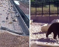 Video Reveals All The Animals This Utah Highway Overpass Has Saved