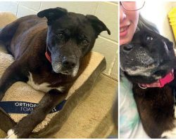 14-Year-Old Shelter Dog Gets Adopted After Spending 11 Years Praying For A Family