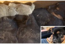 Rancher Says If Cops Don't Come Get Box Of Abandoned Pups He's Not Keeping Them