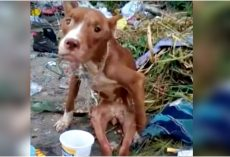Owner Discards Disabled Dog In Landfill & Proves Human Brutality Is Limitless