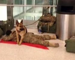 Loyal Battle Buddy Takes It Upon Himself To Guard Exhausted Soldier At Airport