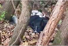 Dog Too Weak To Move In Woods, Concealed Gifts That Were Depleting Her