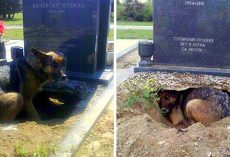 Dog Digs A Large Hole Underneath A Grave, But It's Not For Any Deceased Owner