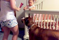 "Woman ""Attacks"" Her Own Baby, But Her Dog Jumps In The Way To Protect The Baby"
