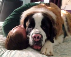 Rescue Dog Uses His Giant Body To Pin Down Dad And Give Him Never-Ending Hugs