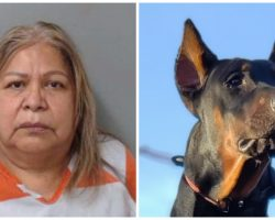 Officers Find Two Severely Emaciated Dogs On Repeat Visit To Woman's Home