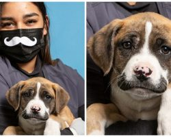 Monster Dumps 9-Week-Old Boxer Mix With Prominent Mustache On Side Of Road