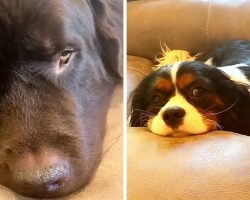 Dogs Make Sad Faces And Send Mom On A Guilt Trip For Eating Chips Without Them