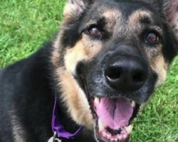 Shelter Dog 'No One Wanted' Saves The One Person Who Finally Gave Her A Chance