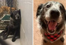 'Abandoned And Broken' Shelter Dog Can't Stop Smiling Once He Realizes He's Found A Forever Home