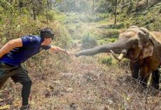 An Elephant Recognizes The Vet Who Saved Him When He Was About To Die 12 Years Ago