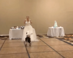 """Best Dog"" And Bride Win Hearts Dancing At Wedding"