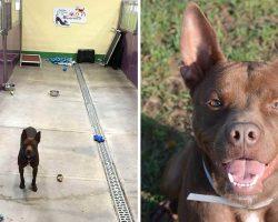 Dog Finds Himself All Alone At Shelter After Everyone Else Gets Adopted