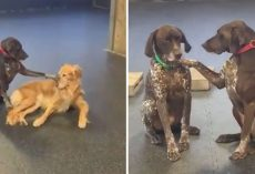 Dog Insists On Petting All The Pups At Her Doggy Day Care