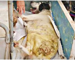 Dog On Deathbed Gazes At 1st Person Who Paid Attention & Smiles Through His Pain