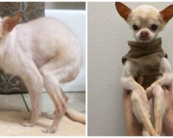 Friendly Dog Spends Entire Life Betrayed By Humans & Dumped At Shelters