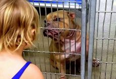 Little Girl Wanted The Dog Who Was Shaking & Hiding At The Back Of The Shelter