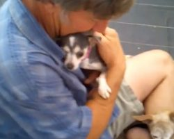 Puppy Mill Dog Never Felt A Human's Touch, So Volunteer Gets In Kennel With Her