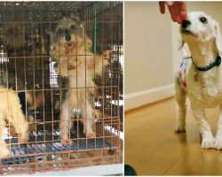 Stud Confined In Puppy Mill His Whole Life Gets First Whiff Of Human Decency